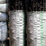 Over 2,000 traders shun  Busia charcoal market